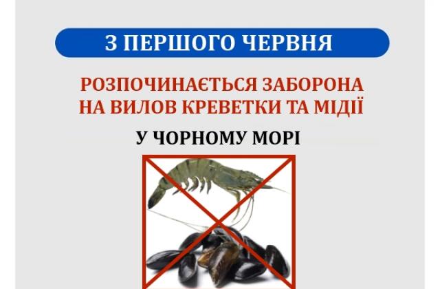 З першого червня у Чорному морі заборонений вилов креветки та мідії