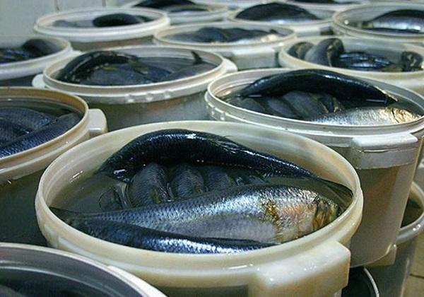 Виробництво солоної риби збільшилося на 20%, - Держрибагентство