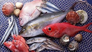 Яка риба найкорисніша?