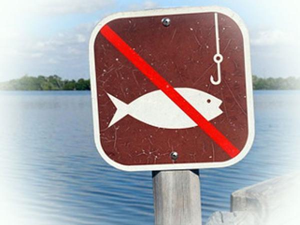 З 15 лютого в Чорному морі та причорноморських лиманах розпочинається заборона на лов камбали (глоси)