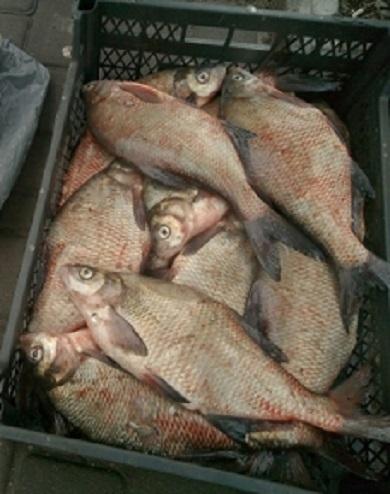 У лютому вилучено 45 заборонених знарядь лову та майже 100 кг водних біоресурсів, - Чорноморський рибоохоронний патруль