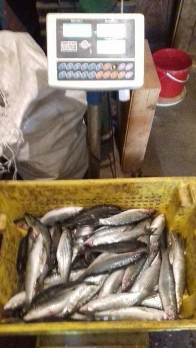 На озері Бурнас викрито грубе порушення правил рибальства