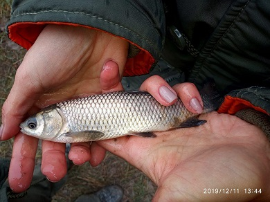 Каланчацький лиман поповнився 4 тоннами риби