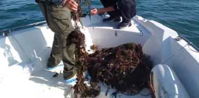 За тиждень зафіксовано збитків понад 48 тис. грн, – Чорноморський рибоохоронний патруль