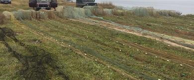 За тиждень Чорноморський рибоохоронний патруль викрив порушень зі збитками понад 32 тис. грн