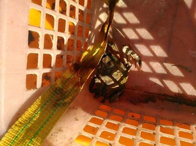 За тиждень завдано  понад 65 тис. грн збитків, - Чорноморський рибоохоронний патруль
