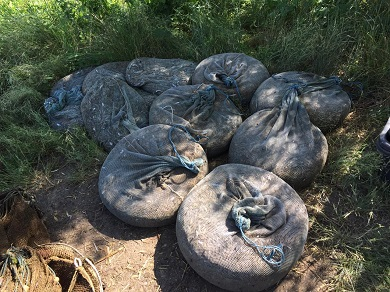 За десять днів зафіксовано збитків понад 260 тис. грн, – Чорноморський рибоохоронний патруль