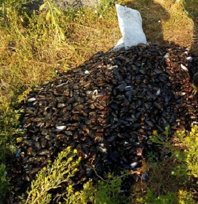 Викрито порушення зі збитками понад 14 тис. грн, - Чорноморський рибоохоронний патруль
