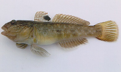 З 23 по 30 вересня  вилучено 22  кг незаконно добутих біоресурсів, -  Чорноморський рибоохоронний патруль
